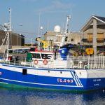 Our Hazel - UL543