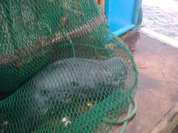 Seal net for sale