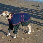 Beach Wear 2002