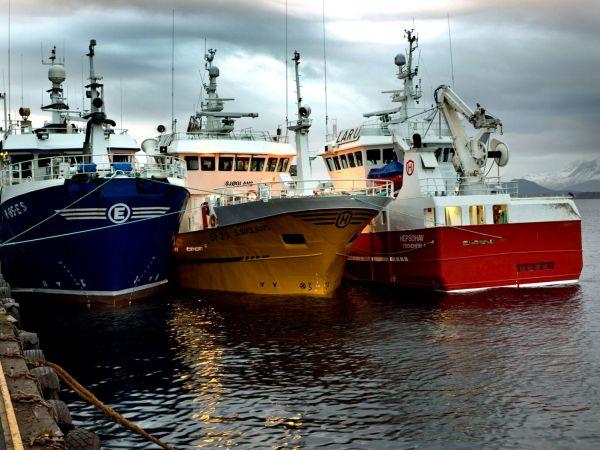 Alesund Purse Seine Fleet