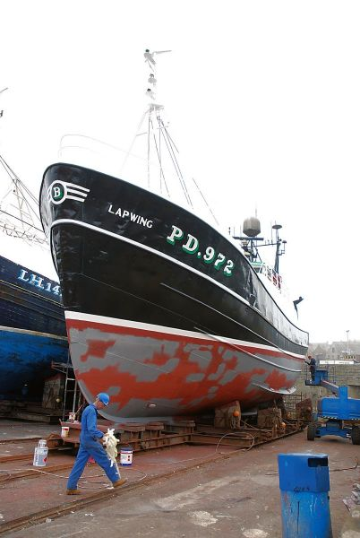 Lapwing - PD972