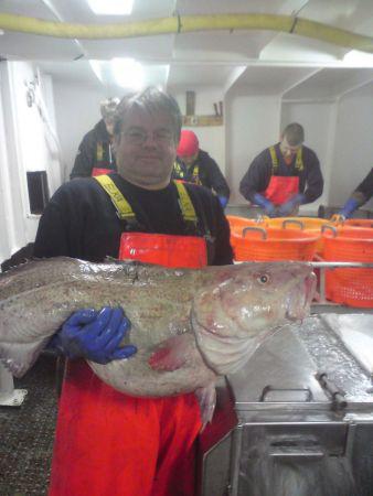big cod