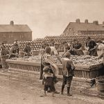 Herring Sorting