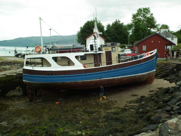Gaelic Rose (Ex Boy Andrew)