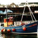 Tern  A 879