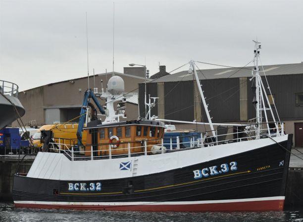 Aubretia  BCK 32