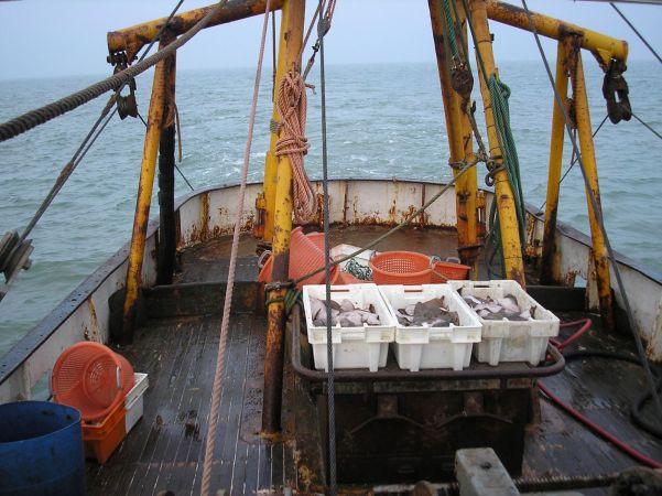 Sole trawling