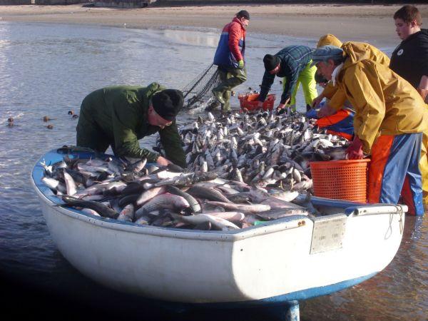 sjef firda seafood