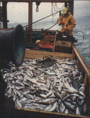 25 of mixed fish from Loch Long
