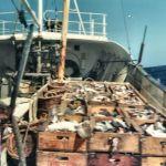 Haul o fish Alert FR147