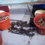 """Lobster & Crab on the """"Bajin"""" BA 777"""