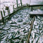 mackerel aboard the broadsword