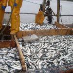 12 bins of herrings on the deck