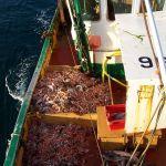 Pond of prawns aboard Kelly Emm SY796