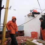 shoveling the catch