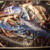 Norwegian Blue Lobster