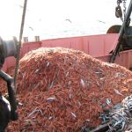 a load of deep sea prawns