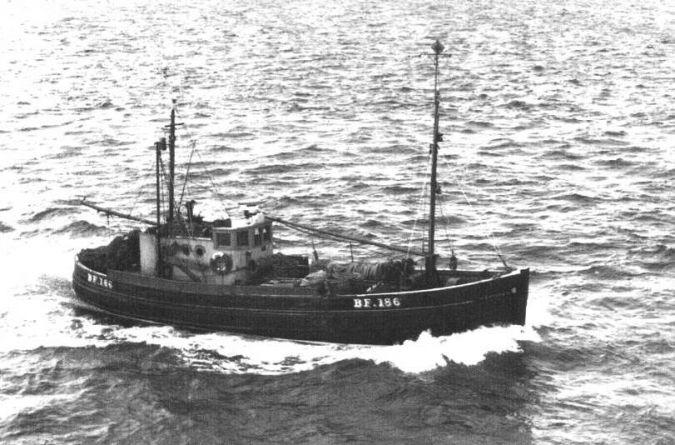 Corona BF186
