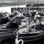a view of the Carradale fleet taken sometime in the 1950's