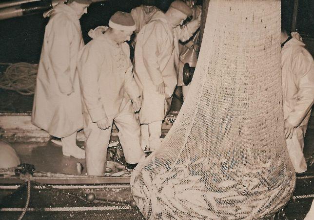Taking herring aboard