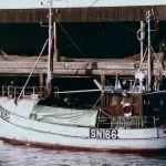 KIM DAVID - SN166