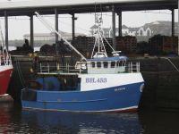 Blueye  BH.453