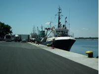 The Fishing Fleet at Nasebar Bulgaria